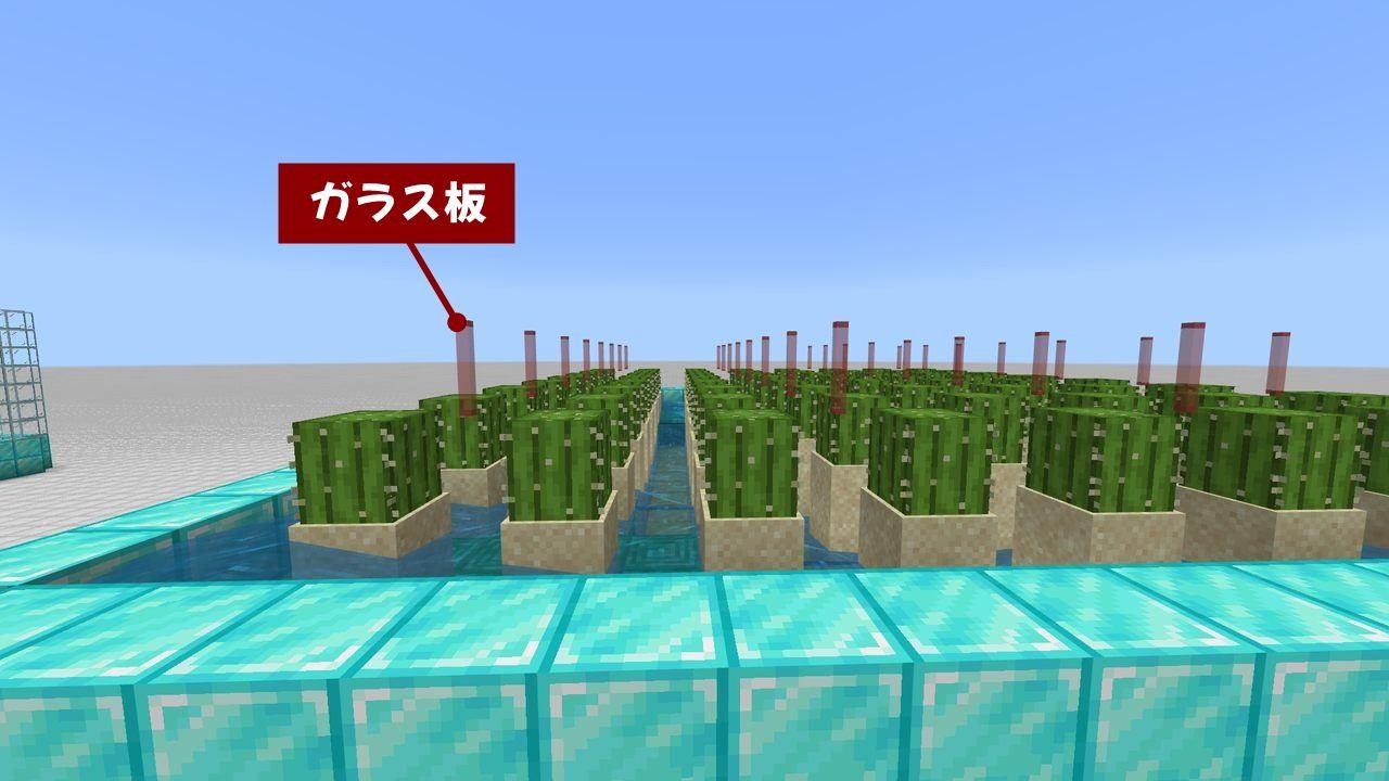 マイクラ サボテン 栽培