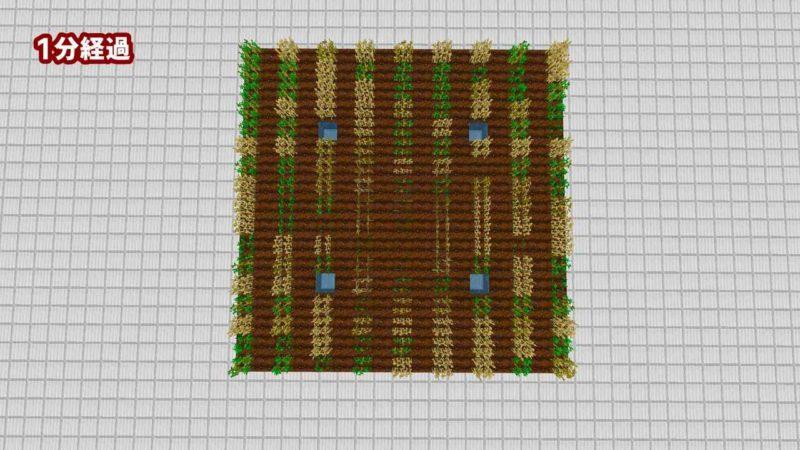 同じ作物を1列離して植える:1分経過
