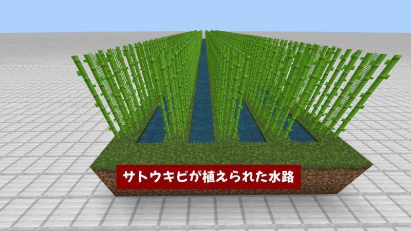 サトウキビが植えられた水路