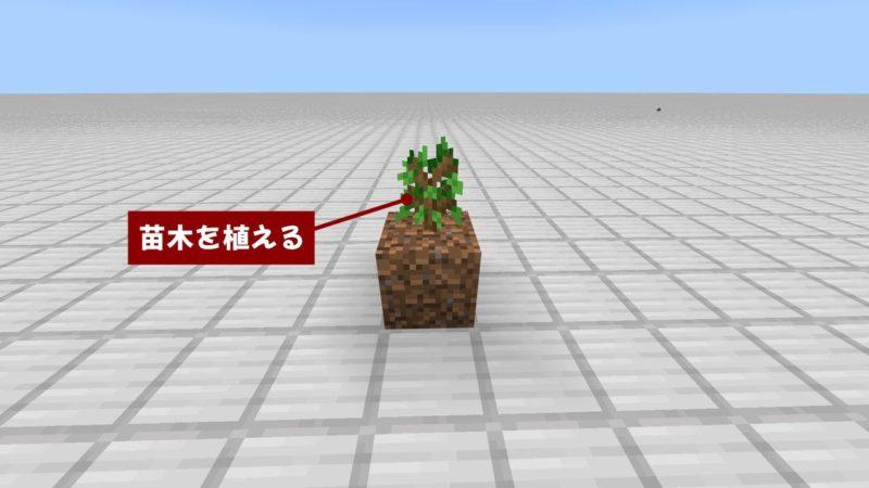 苗木を植える