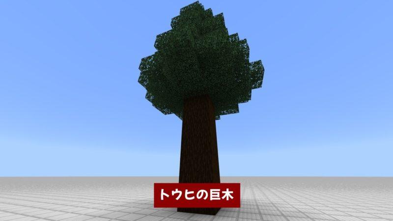 トウヒの巨木