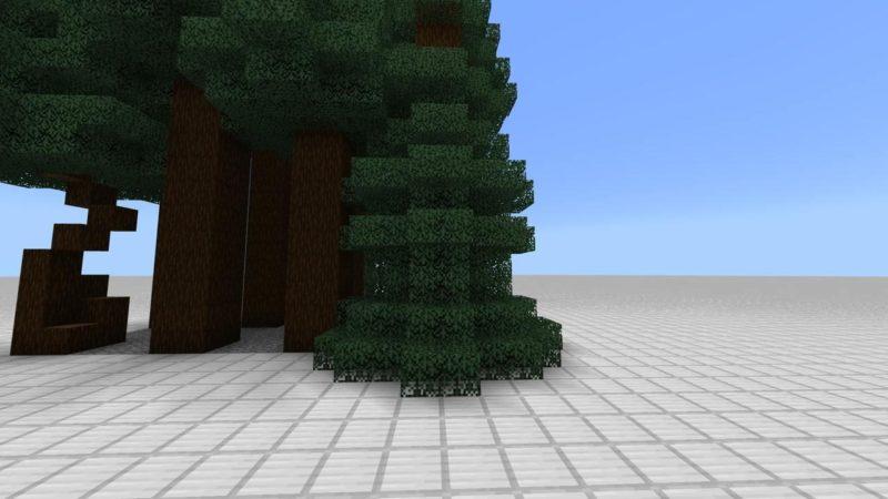 地面まで葉っぱのあるトウヒの巨木