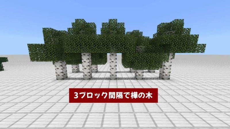 3ブロック間隔で樺の木