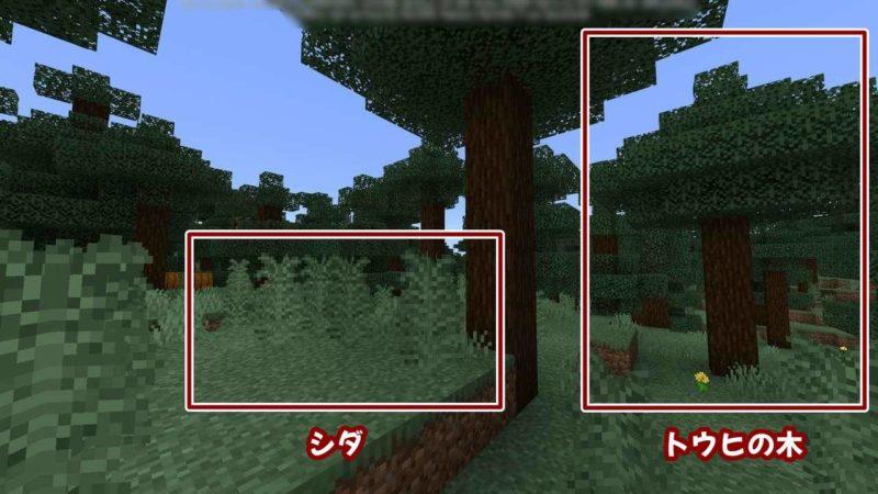 シダとトウヒの木