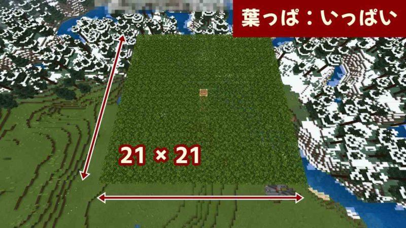21 × 21の葉っぱ